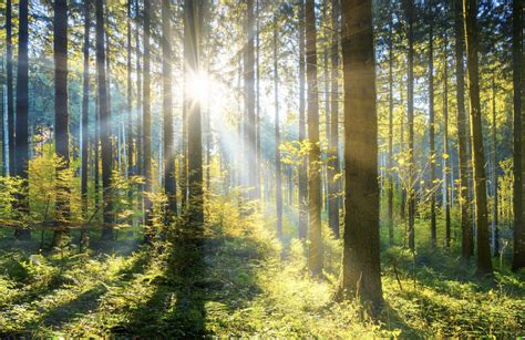 Want to fight global warming? Just plant more trees, for