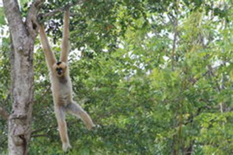 Monkey Hanging Out stock image