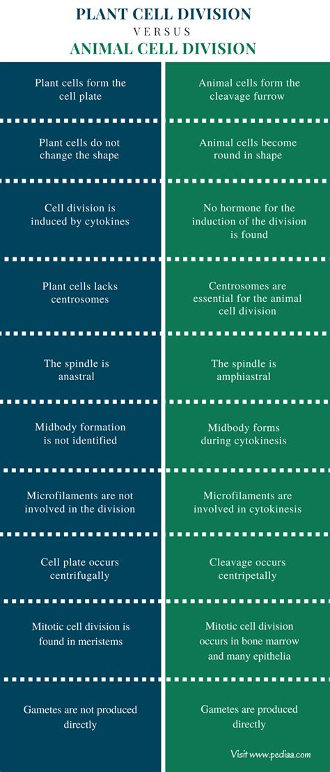Difference Between Plant and Animal Cell Division
