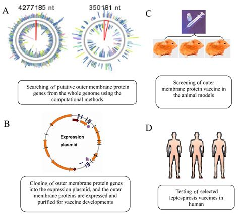 Leptospirosis vaccines   Microbial Cell Factories   Full Text